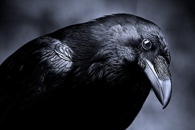 eye of the crow study guide