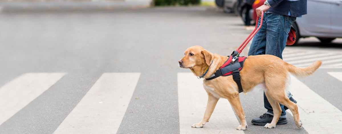 what day is international guide dog day