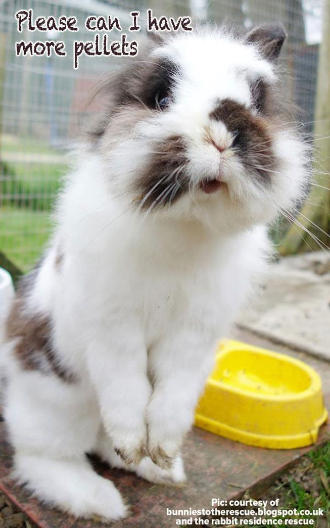 french lop rabbit care guide