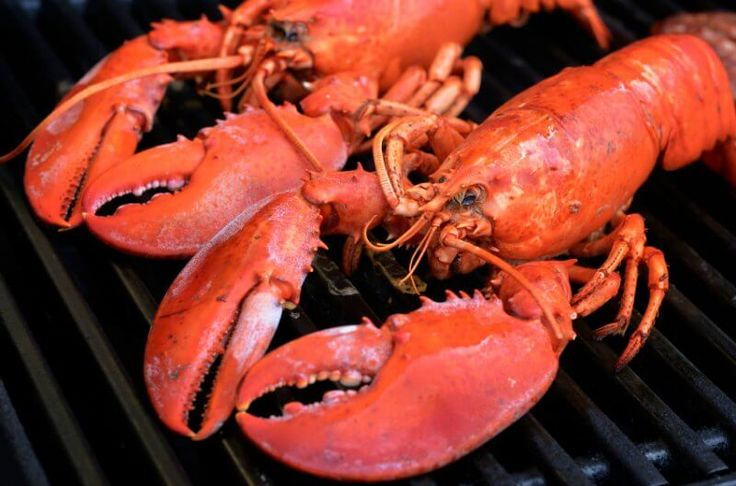 maine lobster direct cooking guide