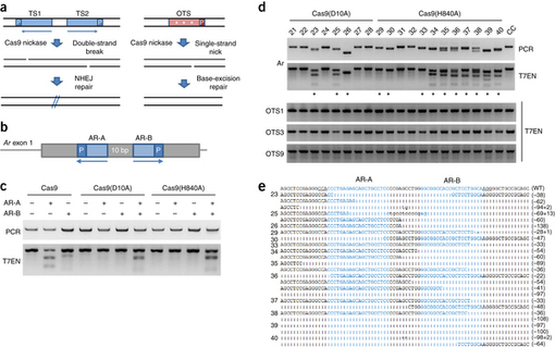 genome engineering of drosophila with the crispr rna-guided cas9 nuclease
